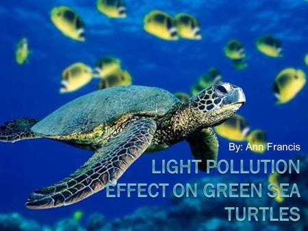 By: Ann Francis. Overview  The green sea turtle  What is light pollution  What's the threat  Prevention & solutions  Conclusion.