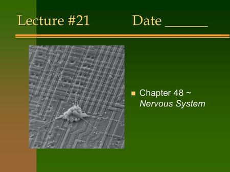 Lecture #21Date ______ n Chapter 48 ~ Nervous System.