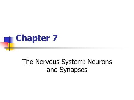 Chapter 7 The Nervous System: Neurons and Synapses.