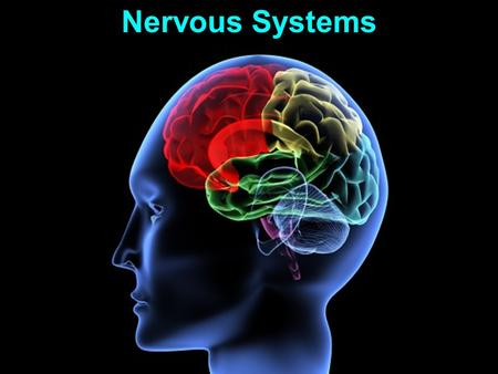Nervous Systems. Functions: 1. Sensory input 2. Integration 3. Motor output Nervous Systems.