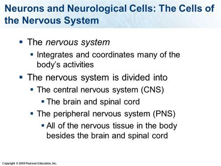 Copyright © 2009 Pearson Education, Inc. Neurons and Neurological Cells: The Cells of the Nervous System  The nervous system  Integrates and coordinates.