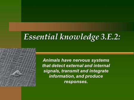 Essential knowledge 3.E.2: Animals have nervous systems that detect external and internal signals, transmit and integrate information, and produce responses.