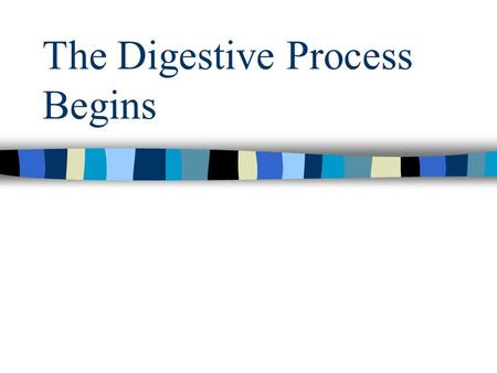 The Digestive Process Begins. What are the three functions of the digestive system?
