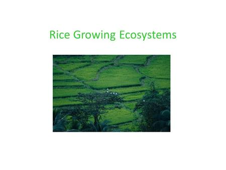 Rice Growing Ecosystems. Classification of Rice Growing Ecosystems Source of water supply Rainfed Irrigated Land and Water management practices Soil condition.