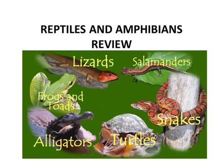 REPTILES AND AMPHIBIANS REVIEW. Which of the following is an AMPHIBIAN? snake salamander fish.