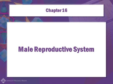 Male Reproductive System Chapter 16. Combining Forms for the Male Reproductive System balan/obalanoplasty epididym/oepididymitis.