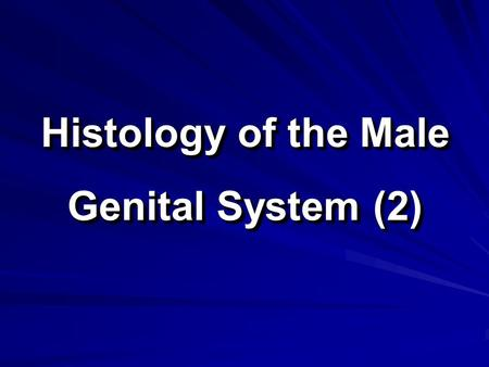 Histology of the Male Genital System (2). The Male Genital System The male genital system consists of: 1. Primary sex organ: two testes. 2. Accessory.