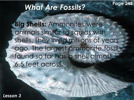 What Are Fossils? Lesson 3 Big Shells: Ammonites were animals similar to squids with shells. They lived millions of years ago. The largest ammonite fossil.