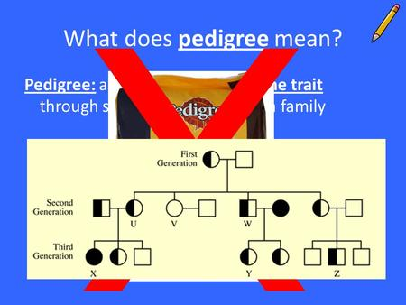 What does pedigree mean? Pedigree: a diagram that traces one trait through several generations of a family X.