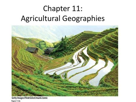 Chapter 11: Agricultural Geographies. What is agriculture? – Domestication Before agriculture? – Hunting & Gathering What changes did agriculture bring.