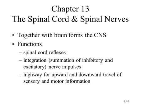 13-1 Chapter 13 The Spinal Cord & Spinal Nerves Together with brain forms the CNS Functions –spinal cord reflexes –integration (summation of inhibitory.