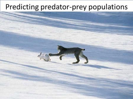 Predicting predator-prey populations. Desired results.