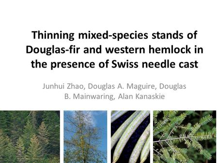 Thinning mixed-species stands of Douglas-fir and western hemlock in the presence of Swiss needle cast Junhui Zhao, Douglas A. Maguire, Douglas B. Mainwaring,