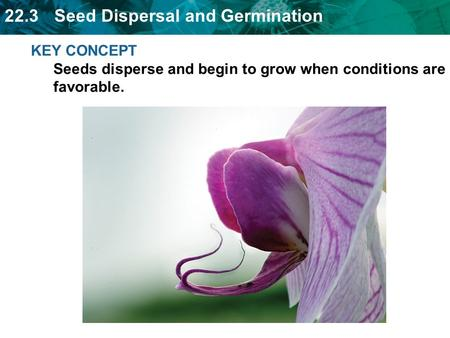 Animals, wind, and water can spread seeds.