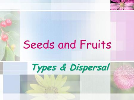 Seeds and Fruits Types & Dispersal. Seeds and Fruit Fruits are formed by seed plants to aid in dispersing seeds A seed contains the developing plant embryo.