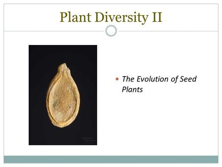 Plant Diversity II The Evolution of Seed Plants. SEEDS! Seeds are plant embryos packaged with a food supply in a protective coat.