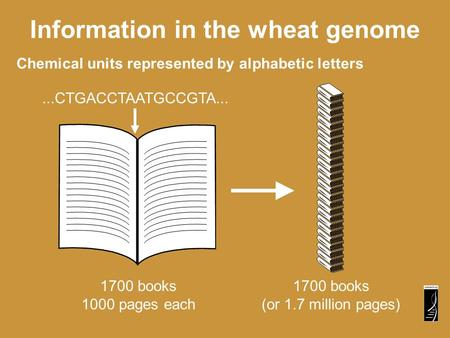 Chemical units represented by alphabetic letters Information in the wheat genome...CTGACCTAATGCCGTA... 1700 books 1000 pages each 1700 books (or 1.7 million.