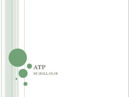 ATP SC.912.L.18.10. E SSENTIAL Q UESTION How is ATP related to energy transfer in the cell? How is ATP generated in the mitochondria and the chloroplast.