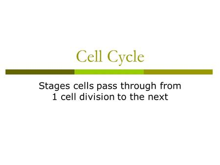 Cell Cycle Stages cells pass through from 1 cell division to the next.