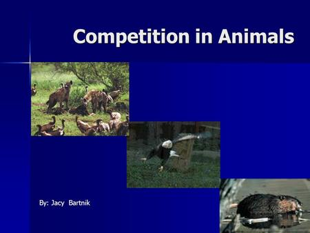 Competition in Animals By: Jacy Bartnik. Competition Competition Competition: common demand by two or more organisms for environmental resources that.