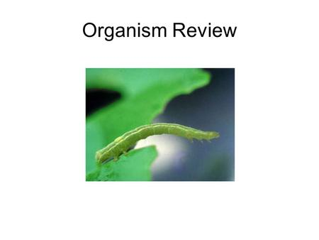 Organism Review. Wowbug Melittobia digitata Animal Kingdom Six legs, exoskeleton Complete metamorphosis Spiracles to breathe Has wings but hops or crawls.