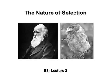 The Nature of Selection E3: Lecture 2. Darwin's Voyages The voyage of the Beagle: –At the age of 22, Darwin set out on a trip around the world aboard.