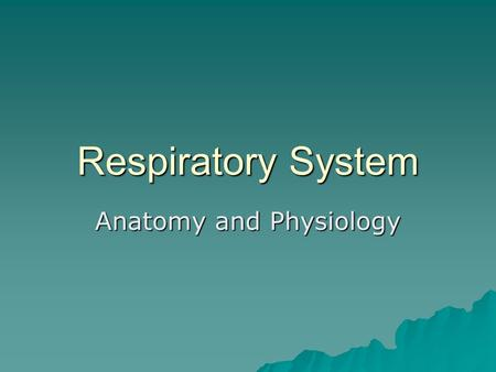Respiratory System Anatomy and Physiology. Parts of the Respiratory System  Nasal Cavity  Pharynx – common passage of food and air  Larynx – 8 rings.