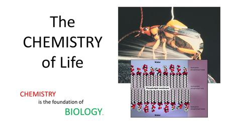 The CHEMISTRY of Life CHEMISTRY is the foundation of BIOLOGY.