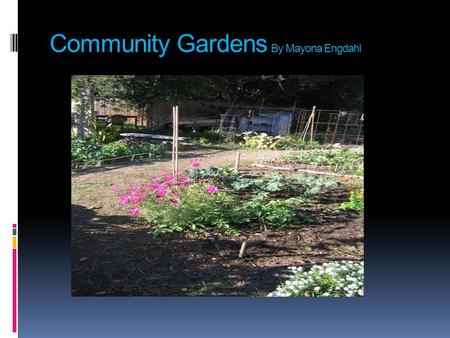 Community Gardens By Mayona Engdahl. Hunger in the US  As of August 2009 36.5 Million people are food stamp recipients (DeParle & Gebeloff New York Times.