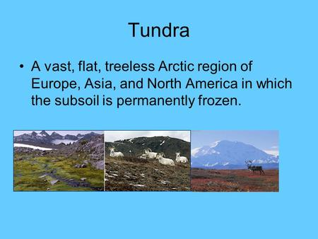 Tundra A vast, flat, treeless Arctic region of Europe, Asia, and North America in which the subsoil is permanently frozen.