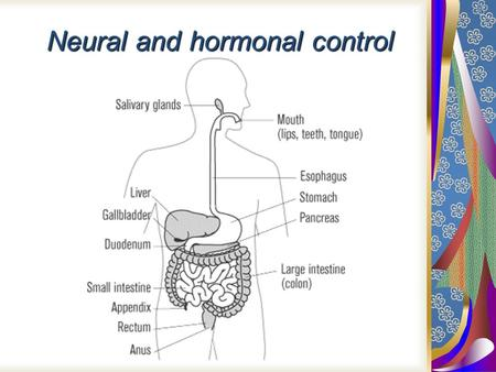 Neural and hormonal control. Cephalic phase Brain activated by smell, sight, thought, taste of food. Neurons to salivary glands and gastric glands/stomach.