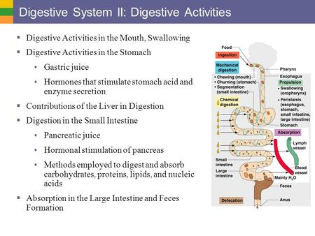 Digestive System II: Digestive Activities  Digestive Activities in the Mouth, Swallowing  Digestive Activities in the Stomach Gastric juice Hormones.