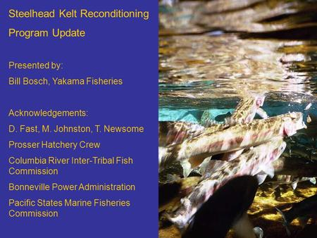 Steelhead Kelt Reconditioning Program Update Presented by: Bill Bosch, Yakama Fisheries Acknowledgements: D. Fast, M. Johnston, T. Newsome Prosser Hatchery.