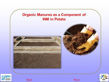 Organic Manures as a Component of INM in Potato NextEnd.