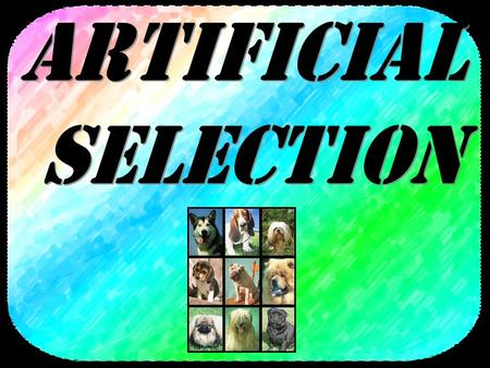 Artificial_Selection.asf Wild dogsTerriers Collies Viemerana Look at the difference between these species of dog below: