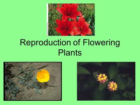 Reproduction of Flowering Plants. Asexual reproduction Fragmentation Root system Original plant Suckers Sucker Plantlets.