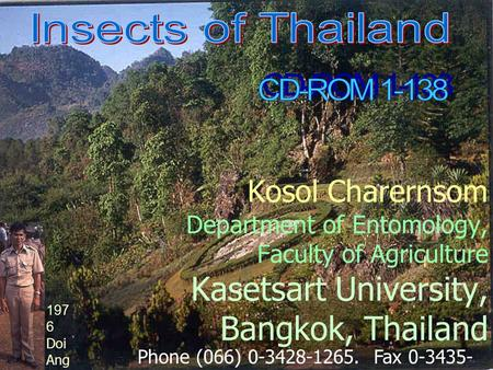 Kosol Charernsom Department of Entomology, Faculty of Agriculture Kasetsart University, Bangkok, Thailand Phone (066) 0-3428-1265. Fax 0-3435- 1881. E-mail: