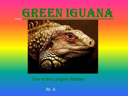 By: JL One of the Longest Reptiles.  Iguanas are in the reptile family Their scientific name is iguana iguana iguana. It is one of the best known reptiles.