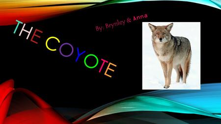 THE COYOTE By: Brynley & Anna. Introduction This presentation is all about Coyotes and how cool they are!