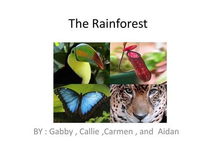 The Rainforest BY : Gabby, Callie,Carmen, and Aidan.