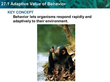 27.1 Adaptive Value of Behavior KEY CONCEPT Behavior lets organisms respond rapidly and adaptively to their environment.