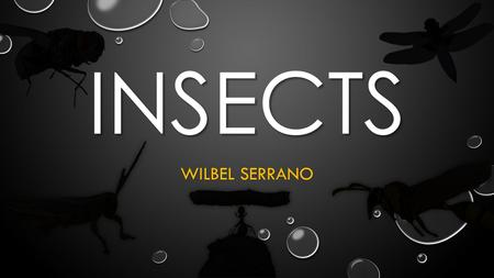 INSECTS WILBEL SERRANO. INSECTS LARGEST GROUP OF ANIMALS LARGEST GROUP OF ANIMALS SPECIES NOT COMPLETELY DISCOVERED SPECIES NOT COMPLETELY DISCOVERED.