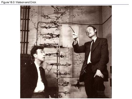 Figure 16.0 Watson and Crick. Figure 16.3 The structure of a DNA stand.