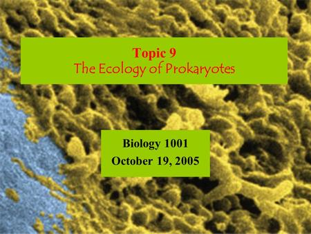 Topic 9 The Ecology of Prokaryotes Biology 1001 October 19, 2005.