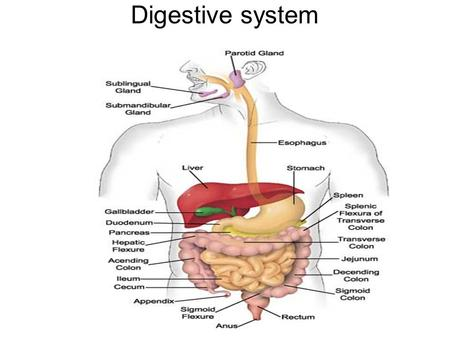Digestive system. End Products of Digestion Proteins Carbohydrates Lipids.