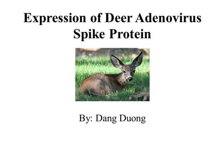 Expression of Deer Adenovirus Spike Protein By: Dang Duong.