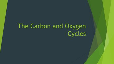 The Carbon and Oxygen Cycles. What is Carbon and how do we get it?  Carbon is one of the most common elements found in living organisms. Chains of.