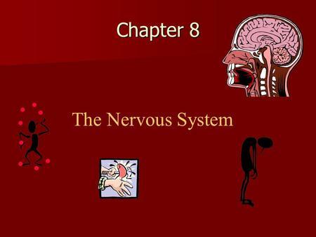 Chapter 8 The Nervous System. Organization of nervous system Central Nervous System Central Nervous System Peripheral Nervous System Peripheral Nervous.