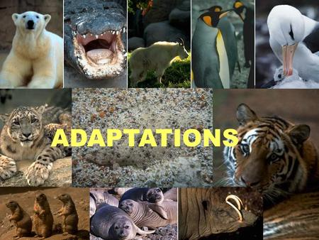 ADAPTATIONS. WHAT IS A TRAIT? WHAT ARE SOME TRAITS WE HAVE? WHY? WHAT ARE SOME TRAITS PLANTS HAVE? WHY?... a characteristic.