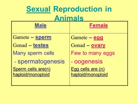 Sexual Reproduction in Animals MaleFemale Gamete – sperm Gonad – testes Many sperm cells - spermatogenesis Sperm cells are(n) haploid/monoploid Gamete.
